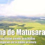 Laguna de Matusaragatí… 50 mil hectáreas al acecho de la palma aceitera