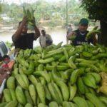 La muerte del Dirigente de los bananeros Rodolfo Aguilar Delgado.    Por: Abdiel De León